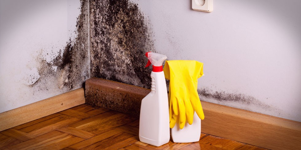 How-to-prevent-and-treat-damp-and-mould.jpg