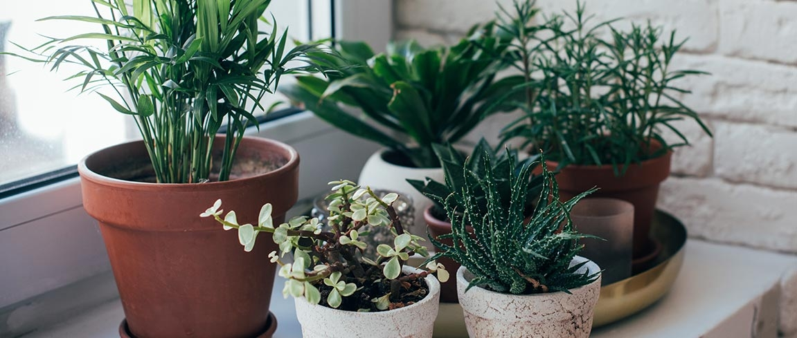 Houseplants-That-Can-Survive-the-Apocalypse.jpg