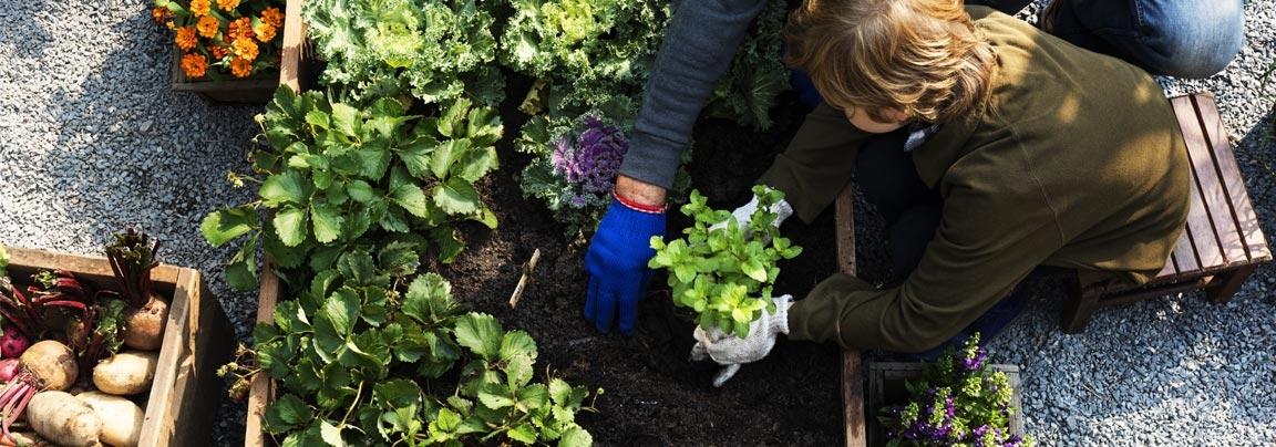 vegetable-gardening-tips-for-beginners.jpg